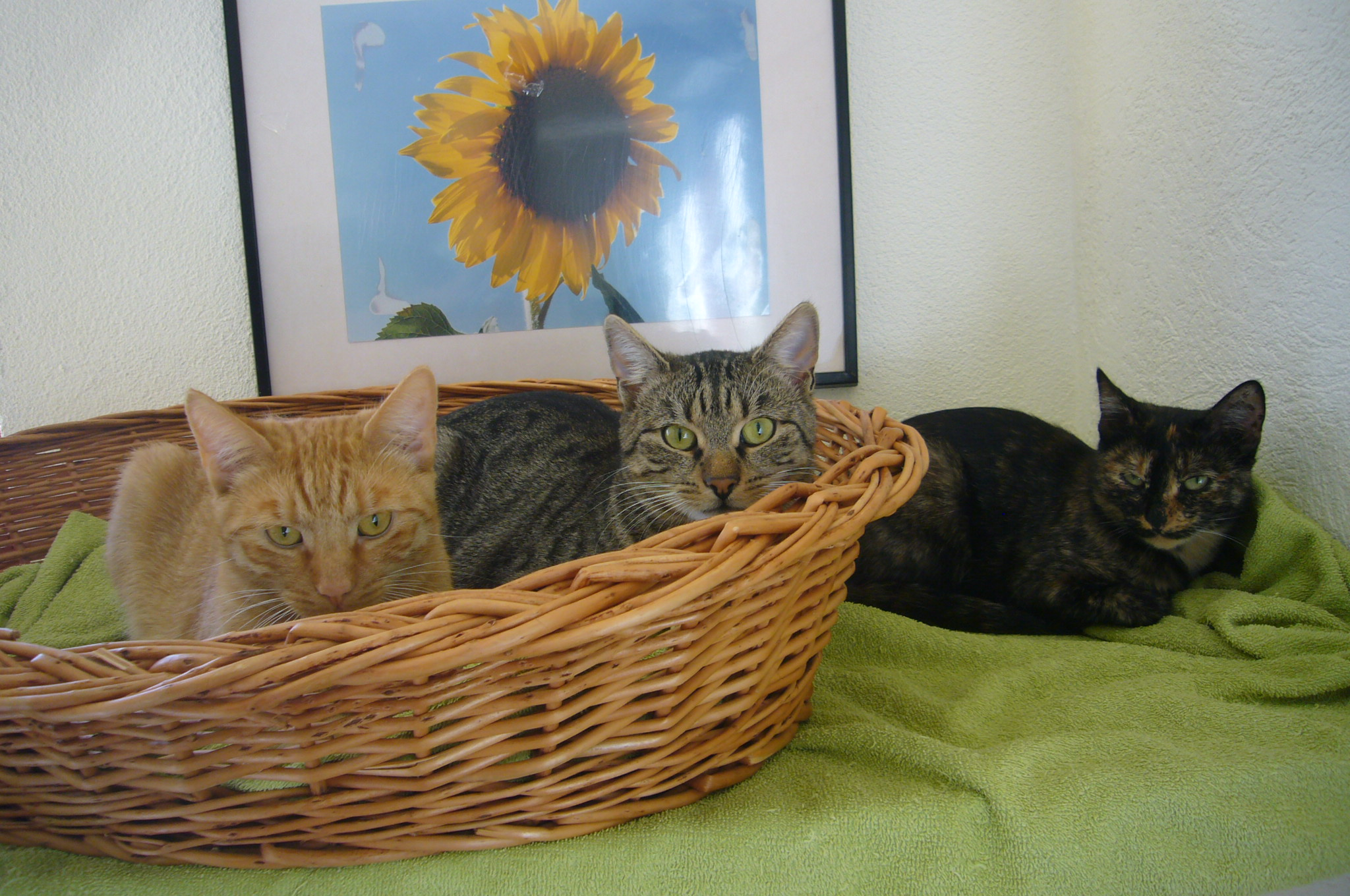 Leo, Leon und Mimmi