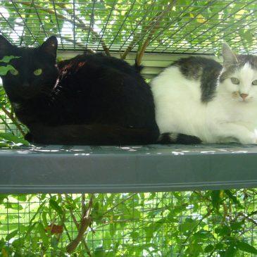 Cora und Otti